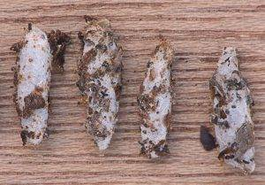 Tips to Tell if You Have a Moth Infestation