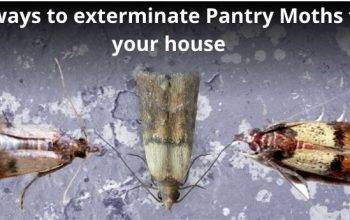 How to Get Rid of Pantry Moths & prevent them: 9 easy ways