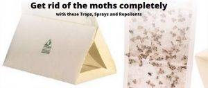 The best pantry moth traps, best moth killers, sprays, and repellents.