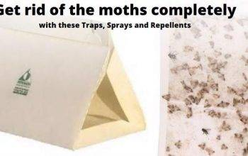 12 Pantry Moth Traps, Killers, Sprays & Repellents that work